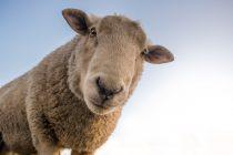 寒い冬がすぐそこに!ウール高騰の対応商品をお勧めします。